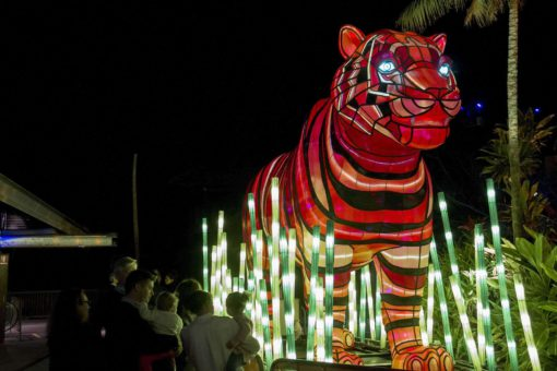 An illuminated trail of giant animal lanterns will light up Taronga Zoo tonight, as the Zoo joins in the spectacle of Vivid Sydney, the world's largest festival of light, music and ideas, for the first time as part of its Centenary celebrations. A six-metre-long Platypus, a Marine Turtle with moving fins, a growling Sumatran Tiger and a bright blue Asian Elephant will be just four of the stars of the festival's wildest precinct from 27 May to 18 June. Created by Ample Projects, the collection of multimedia light sculptures is among the largest and most technologically advanced lanterns ever featured in Vivid Sydney. PHOTOGRAPH PROVIDED BY IBERPRESS +39-3428017058 http://www.iber-press.com/ nimarafat@me.com