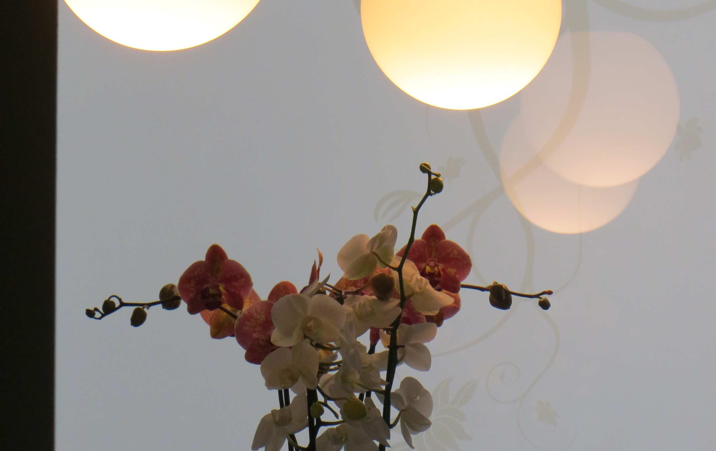 Luce calda e indiretta per il centro fitness luce e design