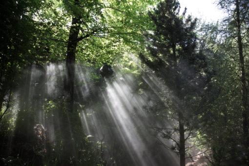 Un'altra immagine diurna dell'illuminazione naturale del Padiglione ( courtesy photo: Daniele Madia)