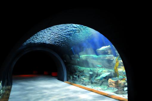 Nel tunnel i visitatori sono completamente immersi nelle profondità marine (cortesia: Helvar)