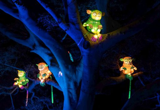 An illuminated trail of giant animal lanterns will light up Taronga Zoo tonight, as the Zoo joins in the spectacle of Vivid Sydney, the world's largest festival of light, music and ideas, for the first time as part of its Centenary celebrations. A six-metre-long Platypus, a Marine Turtle with moving fins, a growling Sumatran Tiger and a bright blue Asian Elephant will be just four of the stars of the festival's wildest precinct from 27 May to 18 June. Created by Ample Projects, the collection of multimedia light sculptures is among the largest and most technologically advanced lanterns ever featured in Vivid Sydney. PHOTOGRAPH PROVIDED BY IBERPRESS